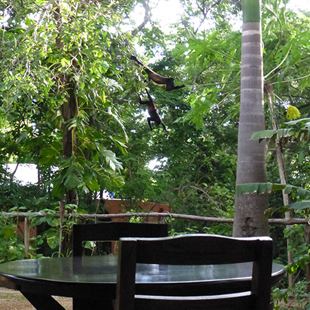 Mexican Cabina garden
